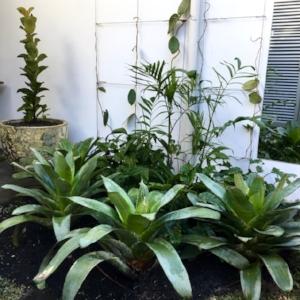 Same garden, but a tropical theme and an Atlantis pot as a focal point in a small corner.