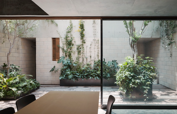 The architecture is seamless. The plants in this Courtyard, whilst not overstated or cluttered are big on impact.