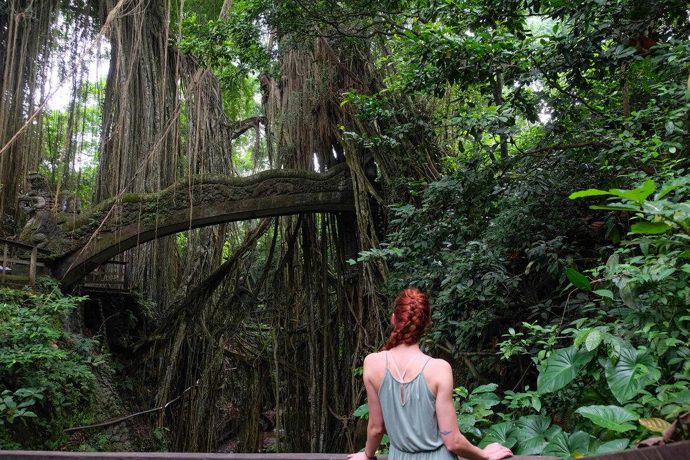 Sacred Monkey Forest in Ubud, Bali