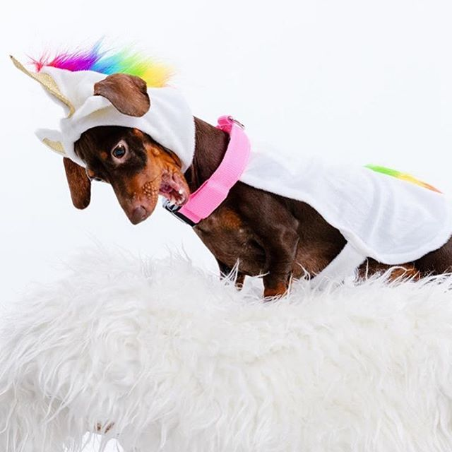 More Halloween inspo from the magical #weinercorn @thepoppypratt 💕🌭🦄
