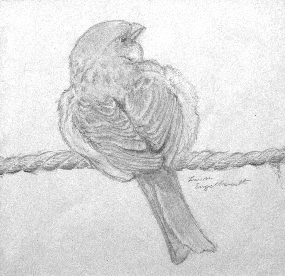 Fluff Bird