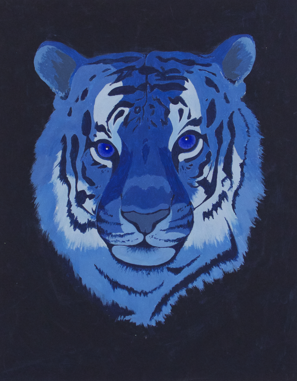 Tigré Blue