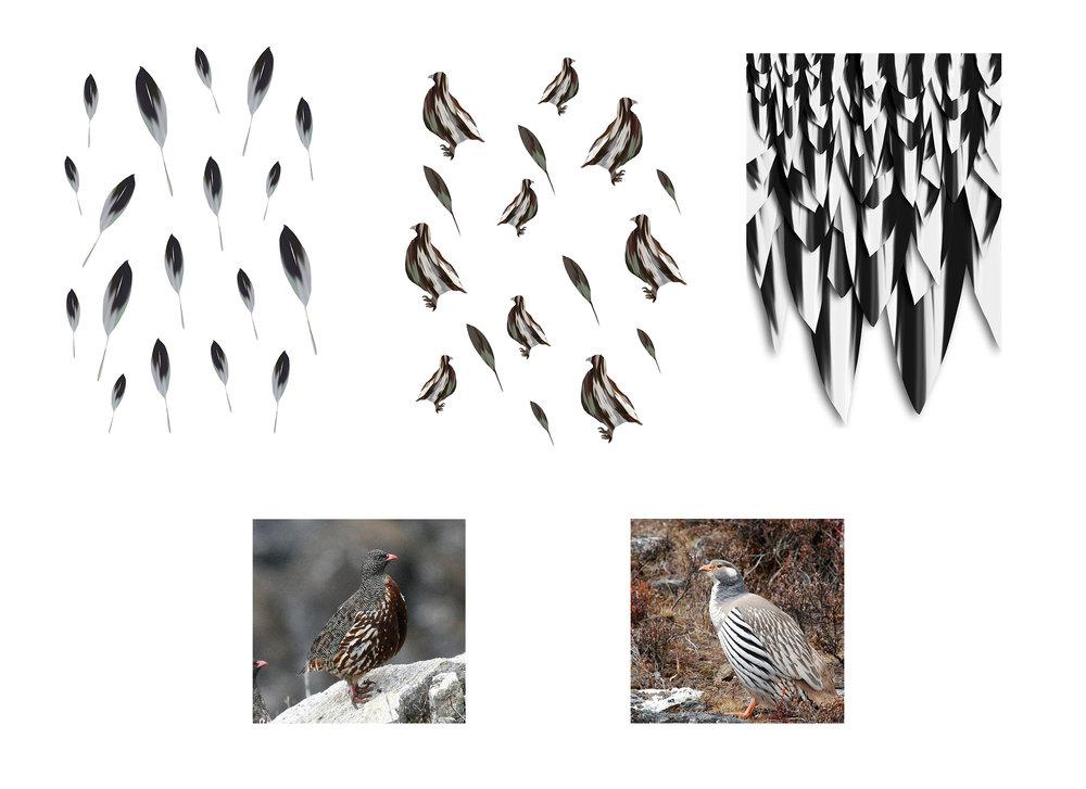 birdssskuzu.jpg