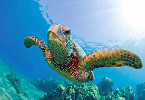 Turtle_Reef_Snorkel_(001).jpg