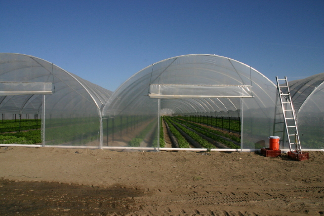 High tunnel growing