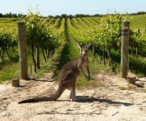 kangaroo-island-5496-1-2.jpg