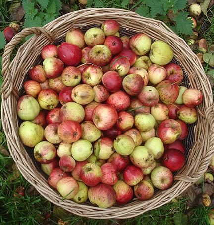 apples-small.jpg