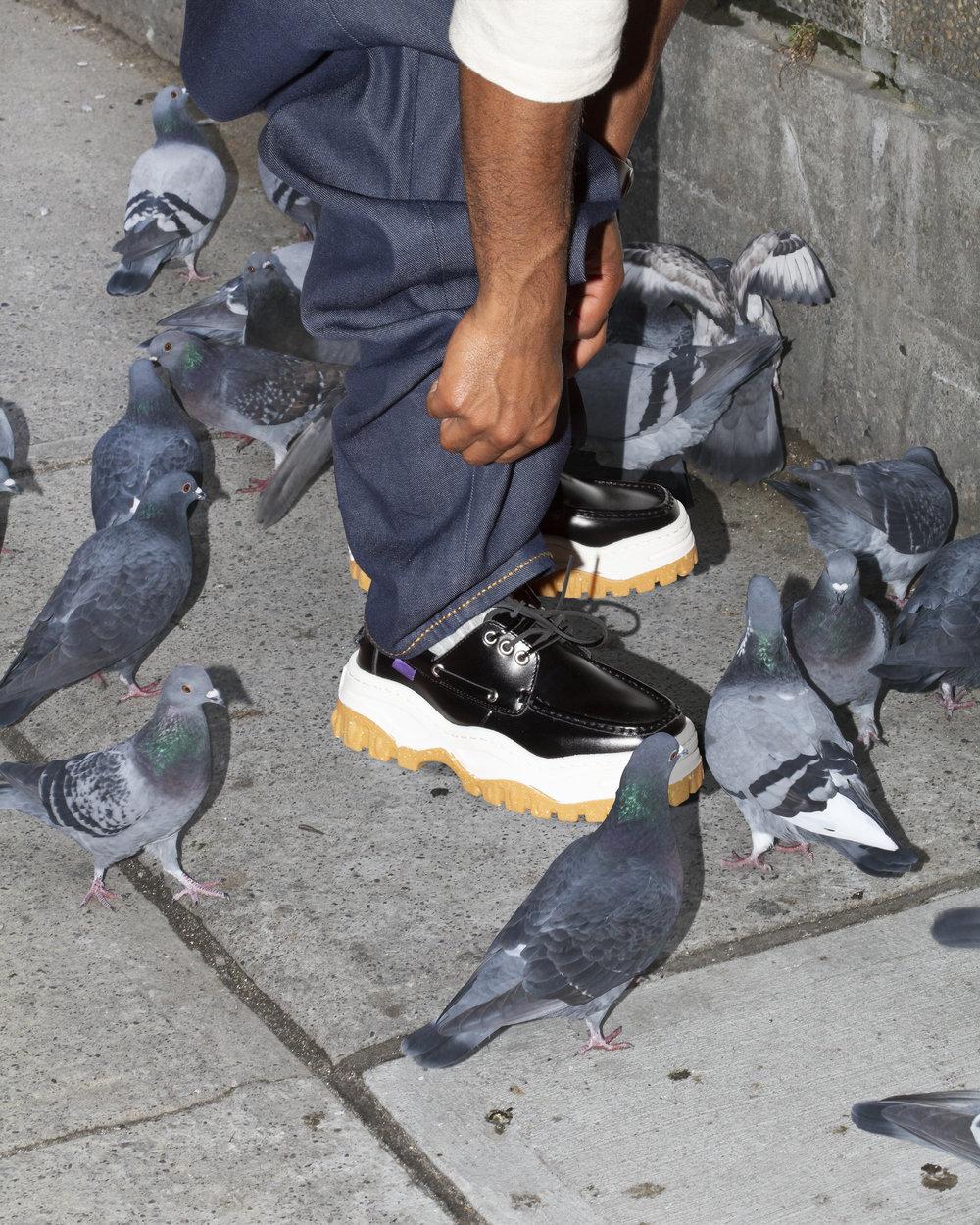 pigeons-wip.jpg