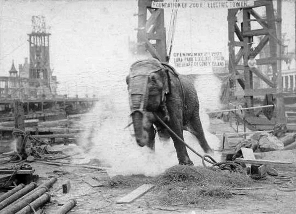 Topsy_elephant_death_electrocution_at_luna_park_1903.png