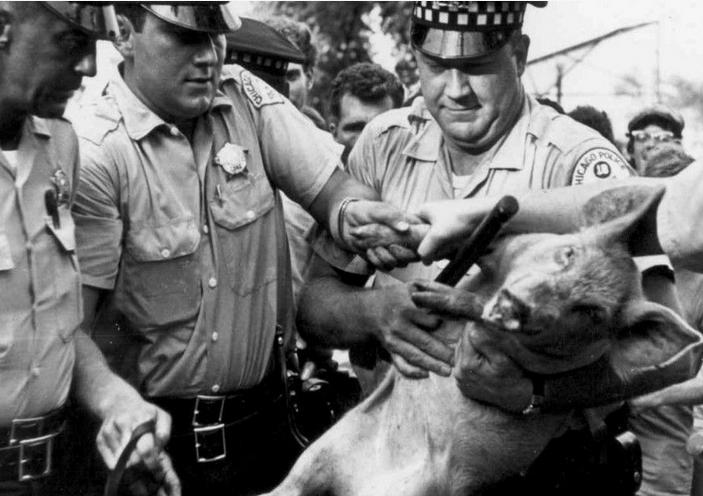 Momento de la detención de Pigasus. Última imagen del animal.