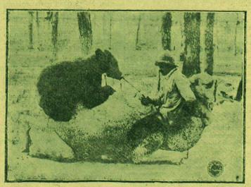 El oso sobre el camello. Fotografía de Marín para «Los auténticos vagabundos» (febrero de 1926)