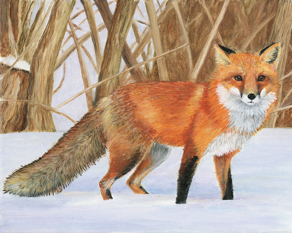 Fox by Mary Gilmartin