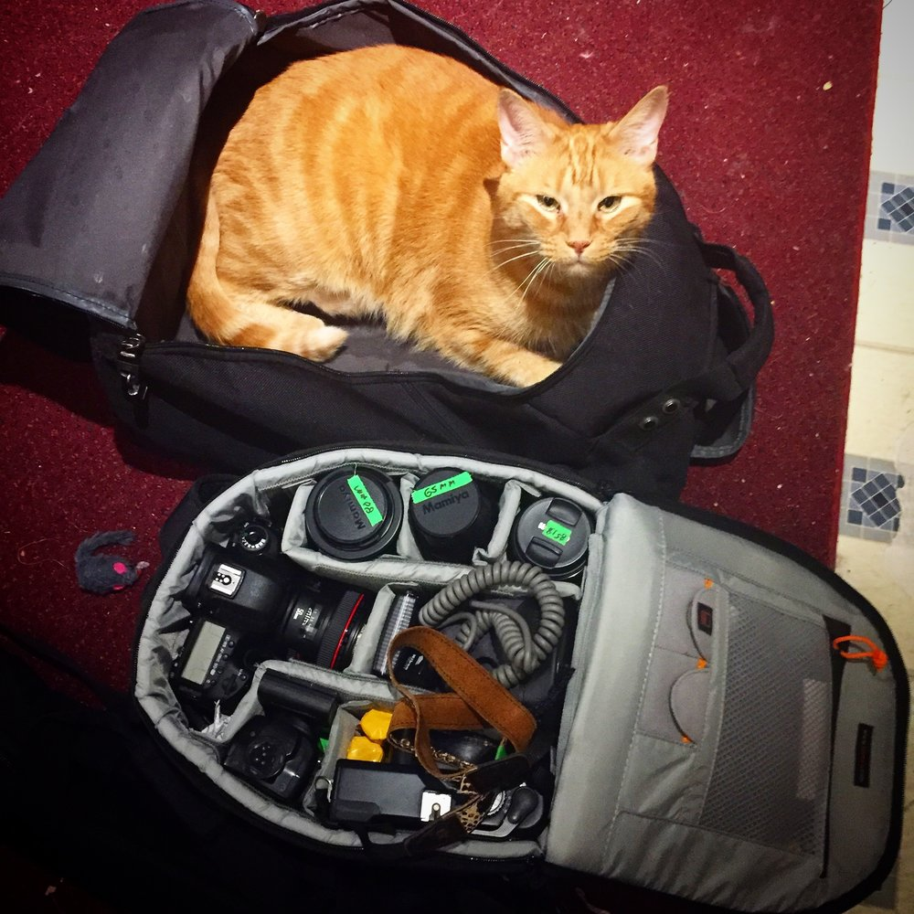 Mr Whiskey Photo assistant and packing consultant extrodinaire