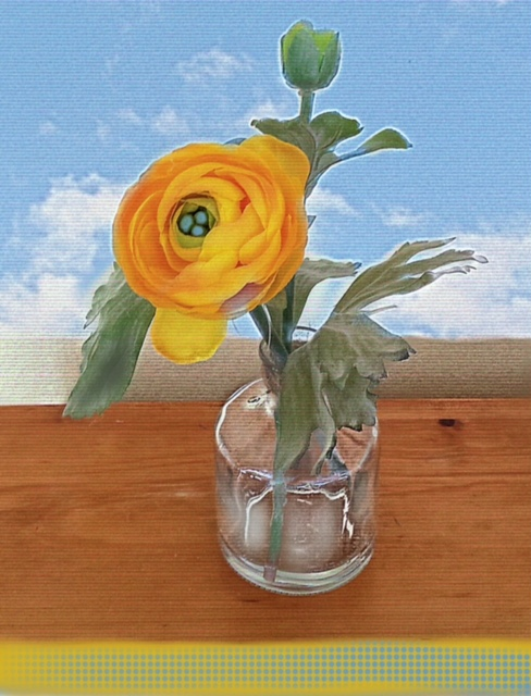 ranunculus_morning
