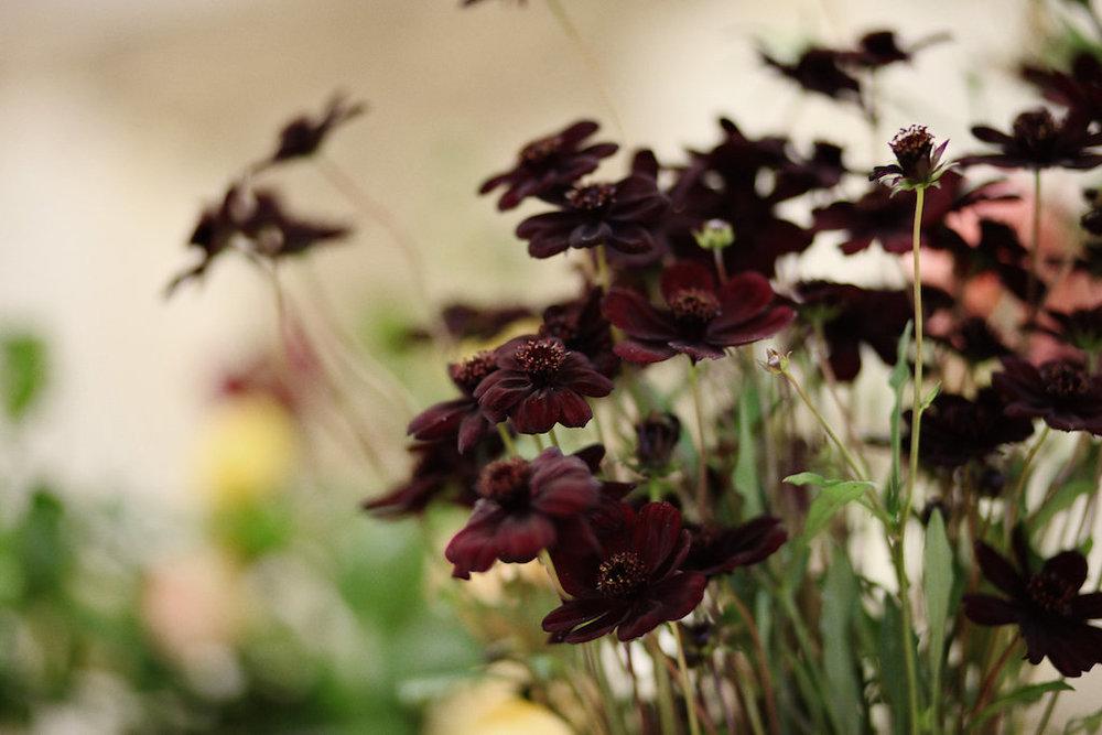 Flowers0168.jpg
