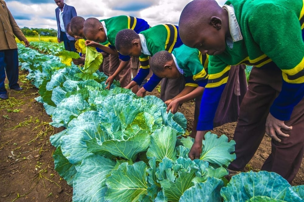 The Vegetable initiative at the Dolly Primary School. The vegetables are used to cook school meals for the children
