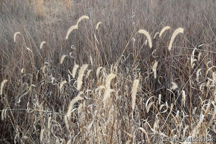 Sleeping Meadow 1