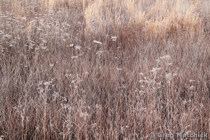 Sleeping Meadow 4