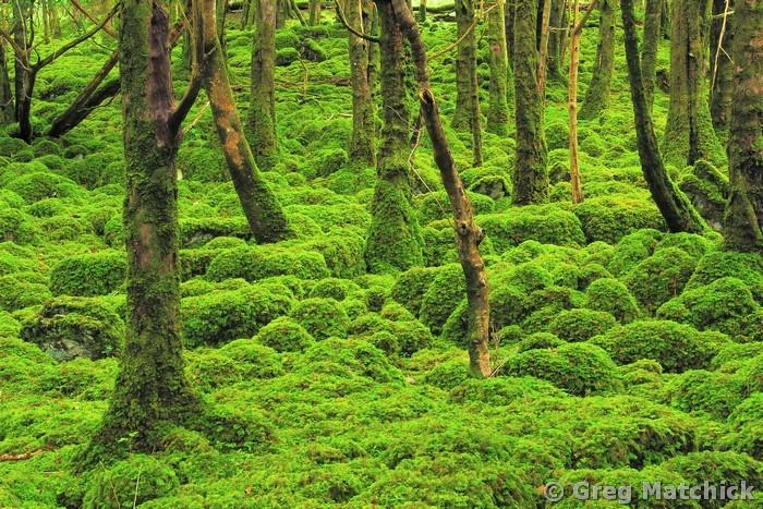 Mossy Woods 4