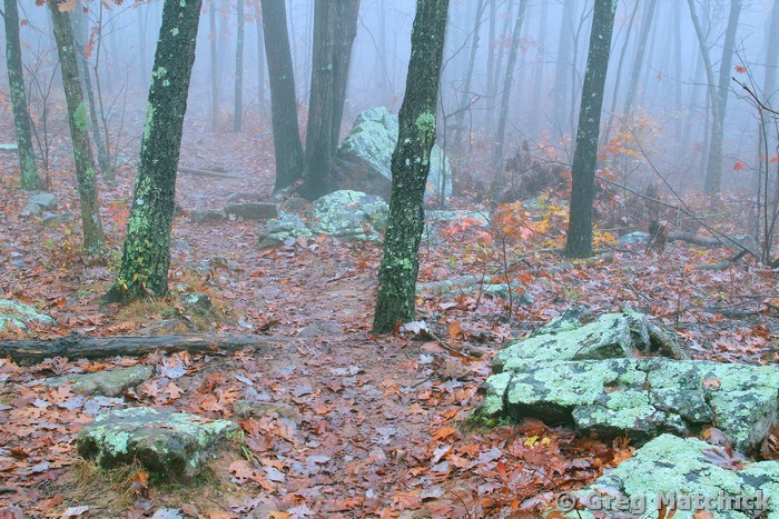 Ozark Trail in the Fog 1 on Taum Sauk Mountain