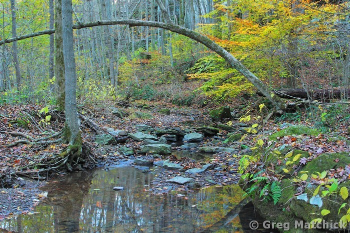 Woodland Creek in Autumn in Big Rocky Hollow 2