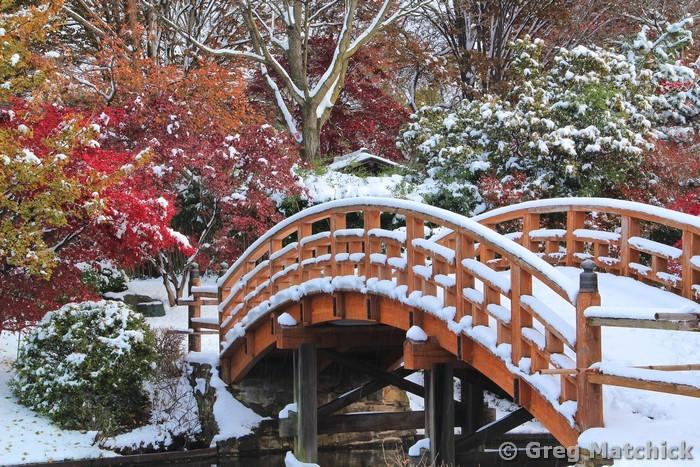 Drum Bridge in Autumn Snow 1