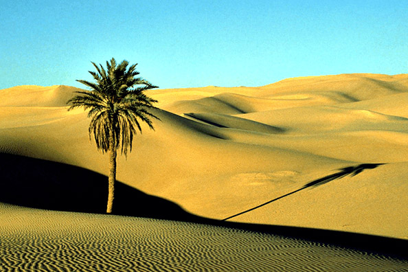 20 African Nations Together To Build 7,600 KM Great Green Wall of Africa Against the Sahara Desert.jpg