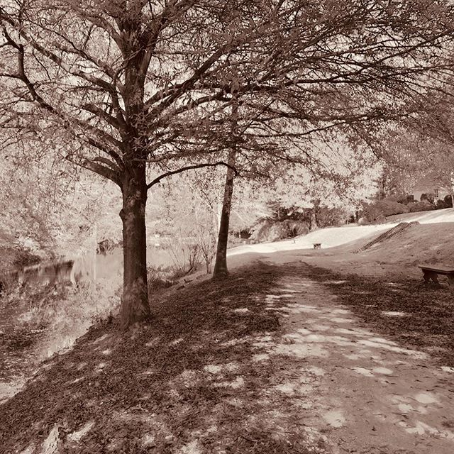 Path along the canal behind the Governor's Palace in Colonial Williamsburg.⠀ .⠀ .⠀ .⠀ #colonialwilliamsburg #governorspalace #autumn #blackandwhitephotography #travel #outdoors #virginia #nature #trees