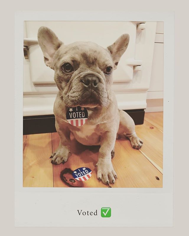#frenchiesofinstagram #voting #throwshadethenvote #teddyandtallulah #teddy #aga