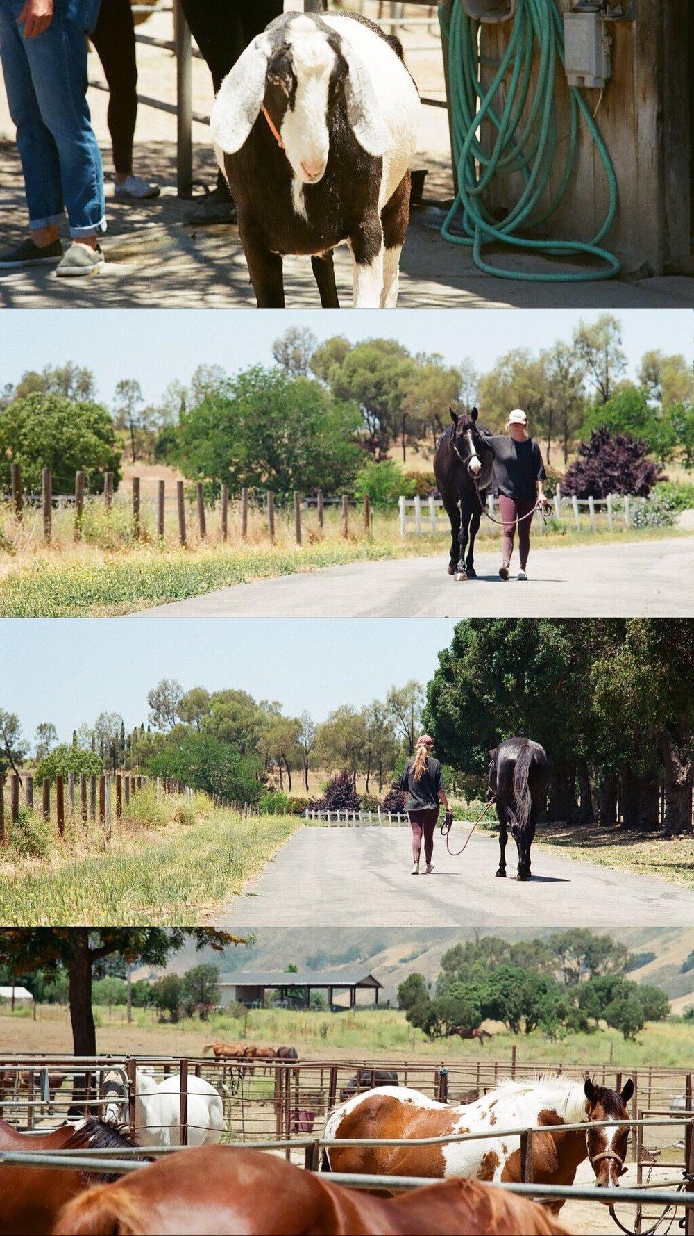 Mia taking George on a walk