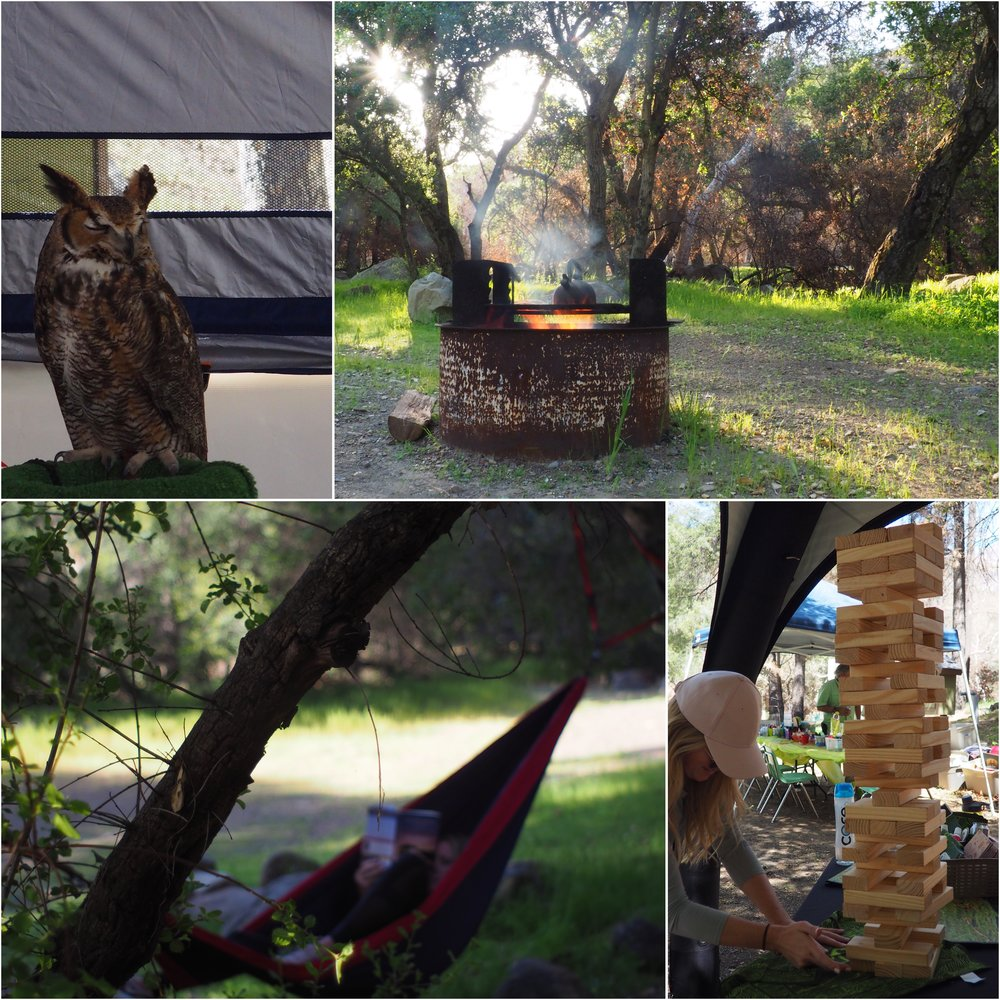"Right after we made breakfast a friendly man drove up to us and told us about opening day for the visitor center. Live animals like this owl, a hawk , snakes and critters were on exhibit. We checked it out and talked to a few Ojai locals about the impact of the Thomas fire, how the center and campgrounds were miraculously saved by setting ""back-fires"" to surround the area and fight back the approaching wildfire. There was an REI CoOp booth and we had what I'd guess was a record breaking Jenga game (look how high that tower is!) and each won some REI steel cups."