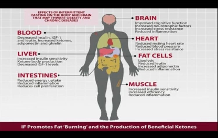 Slide was part of a presentation by Dr. David Jockers on The Benefits of Fasting (10/14/16)