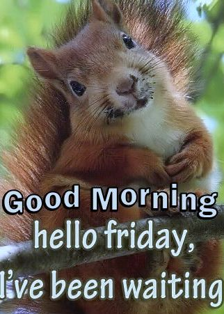 244311-Good-Morning-Hello-Friday.jpg