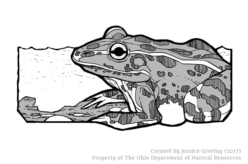 Jessica-Greving_ODNR-Leopard-Frog_2017