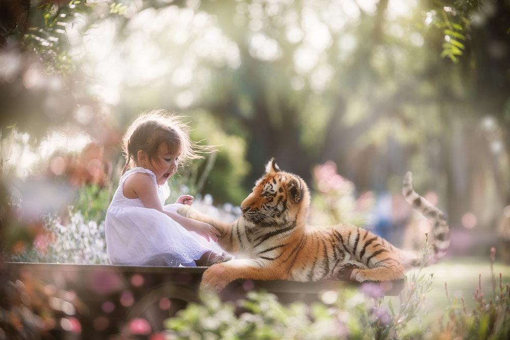 milla tiger.jpg