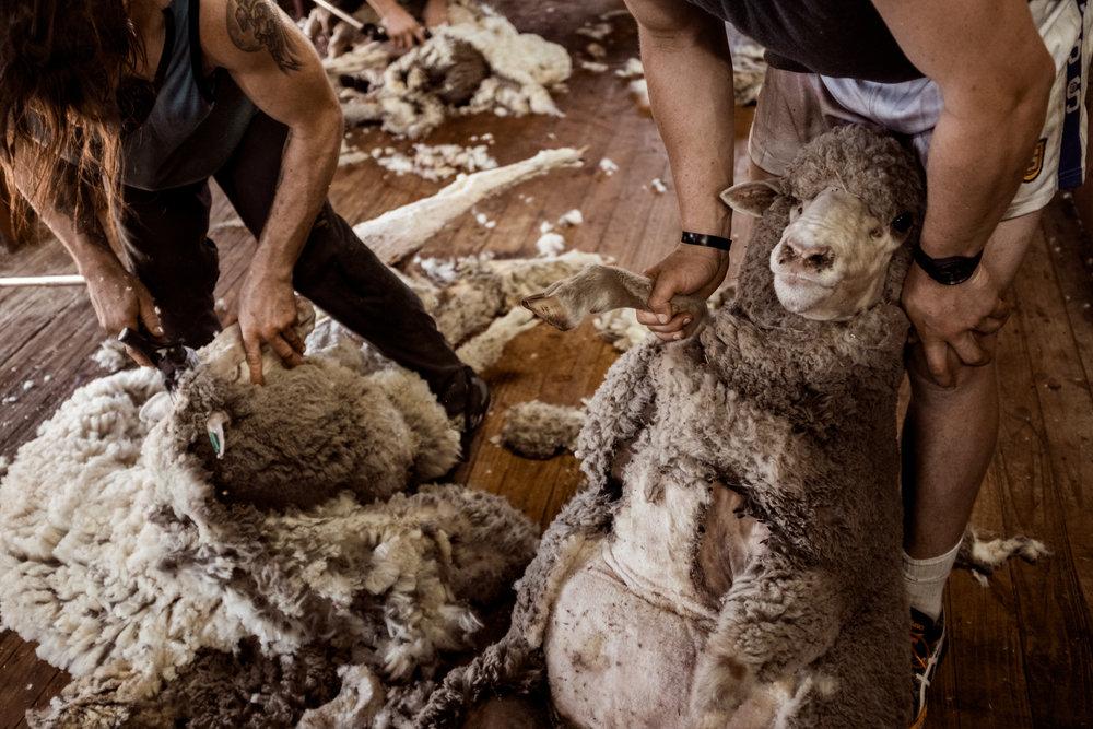 Woolshed-Australa_2.jpg