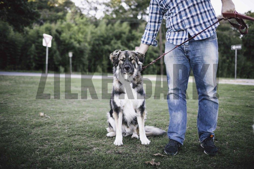 11.18 zilker dogs_-2.jpg