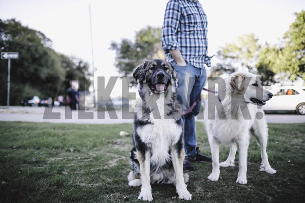 11.18 zilker dogs_.jpg