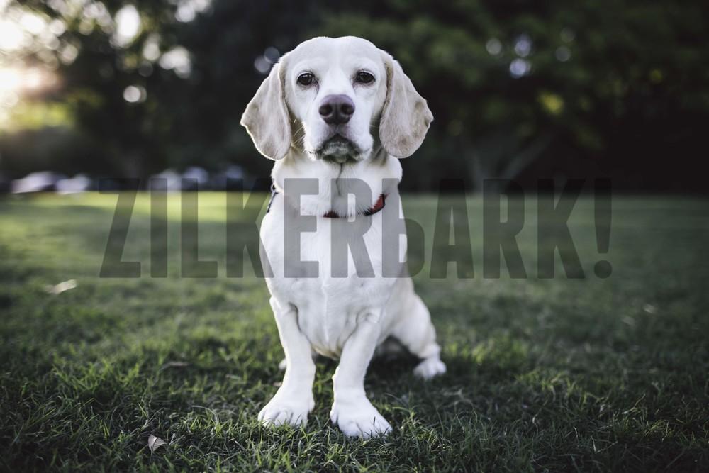 11.18 zilker dogs_-4.jpg