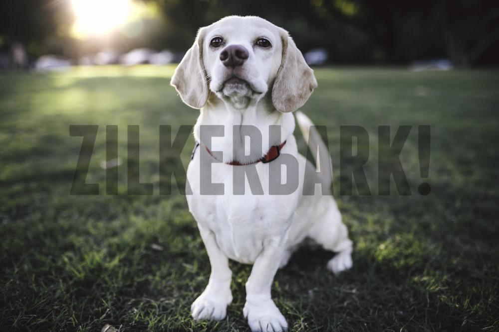 11.18 zilker dogs_-3.jpg