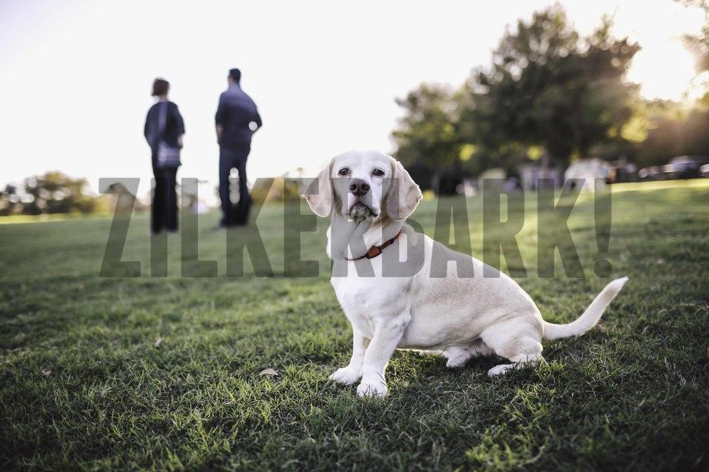 11.18 zilker dogs_-5.jpg