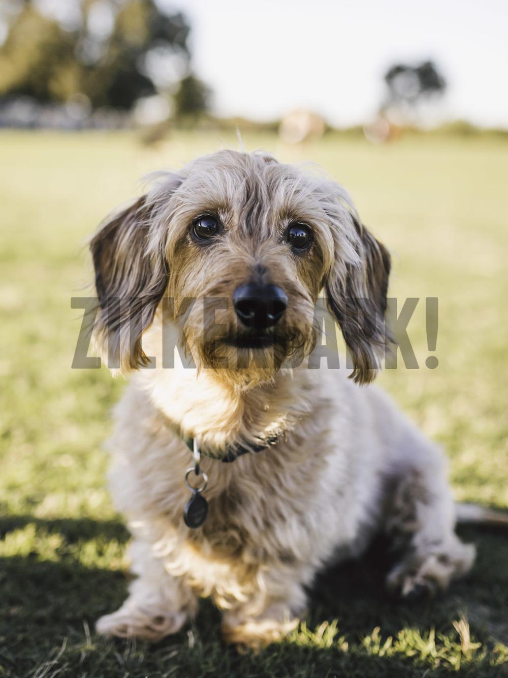 11.18 zilker dogs_-7.jpg