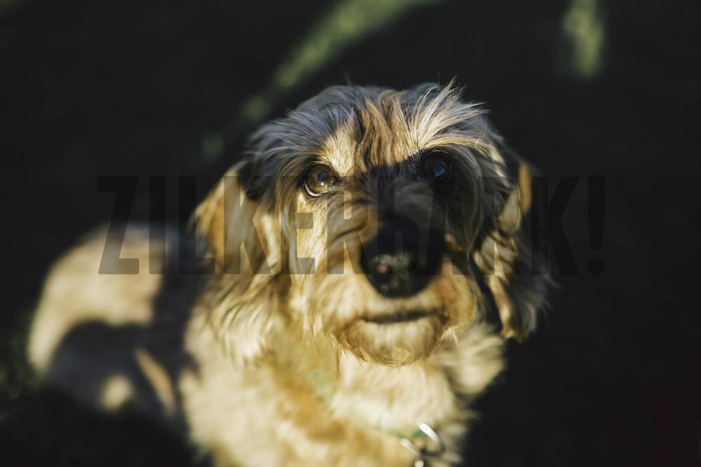 11.18 zilker dogs_-8.jpg