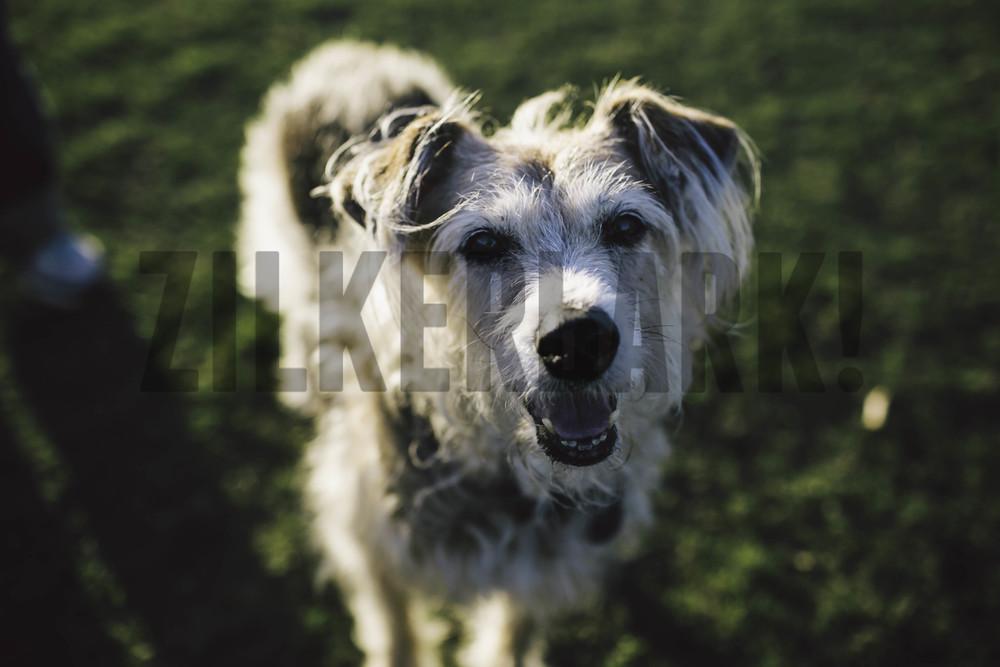 11.18 zilker dogs_-10.jpg