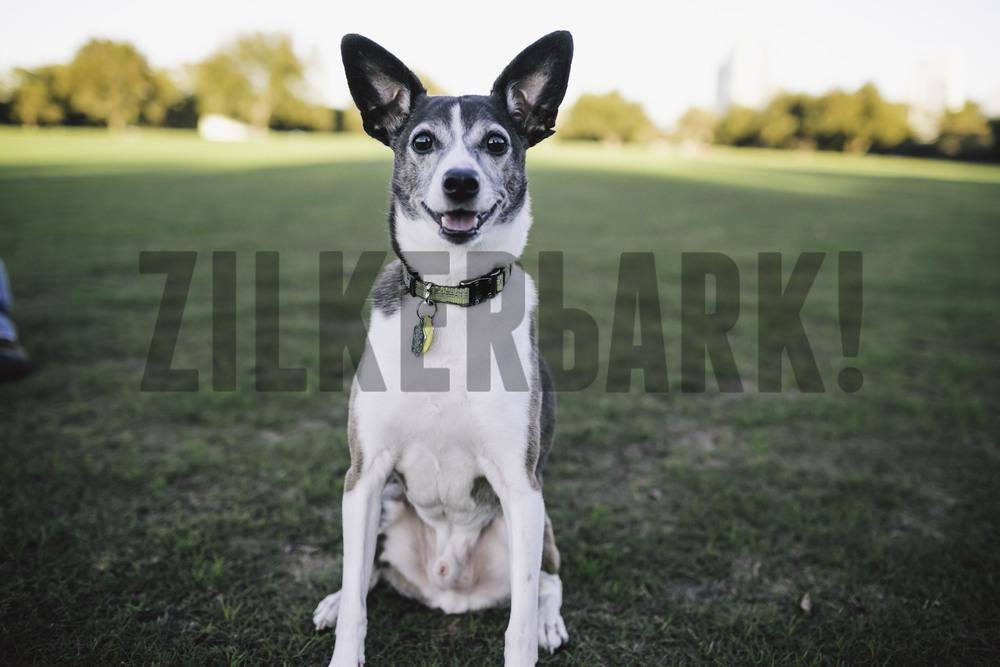 11.18 zilker dogs_-12.jpg