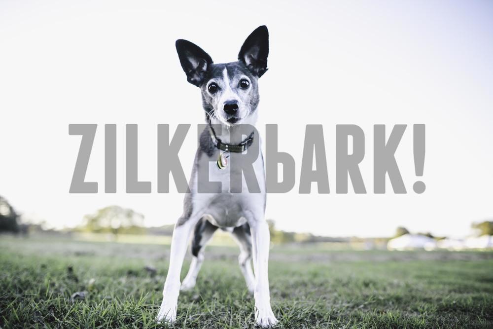 11.18 zilker dogs_-13.jpg