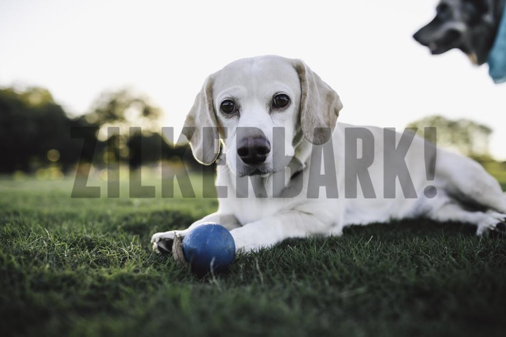 11.18 zilker dogs_-14.jpg