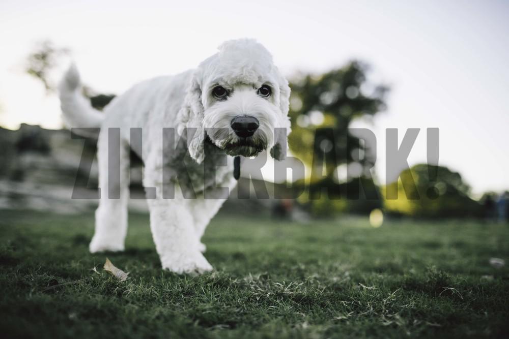 11.18 zilker dogs_-16.jpg
