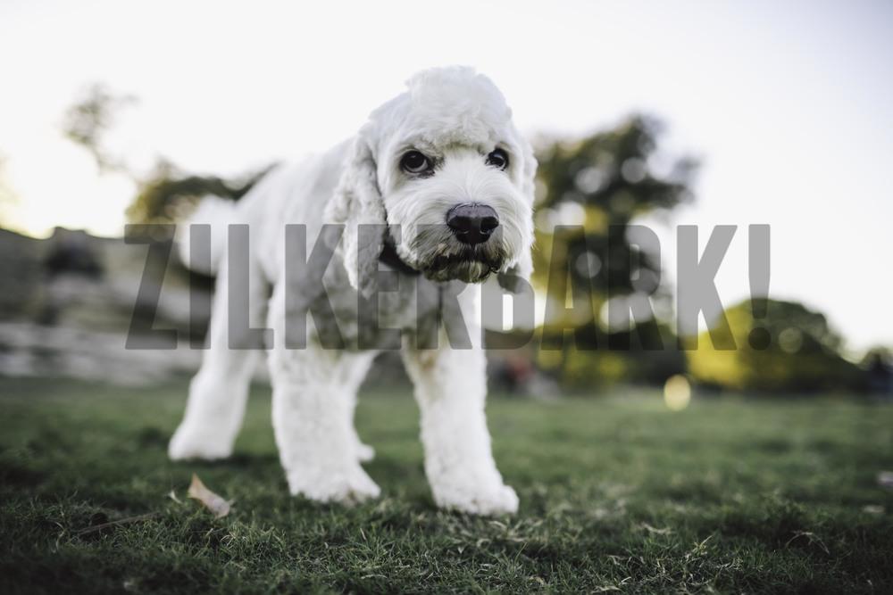 11.18 zilker dogs_-17.jpg