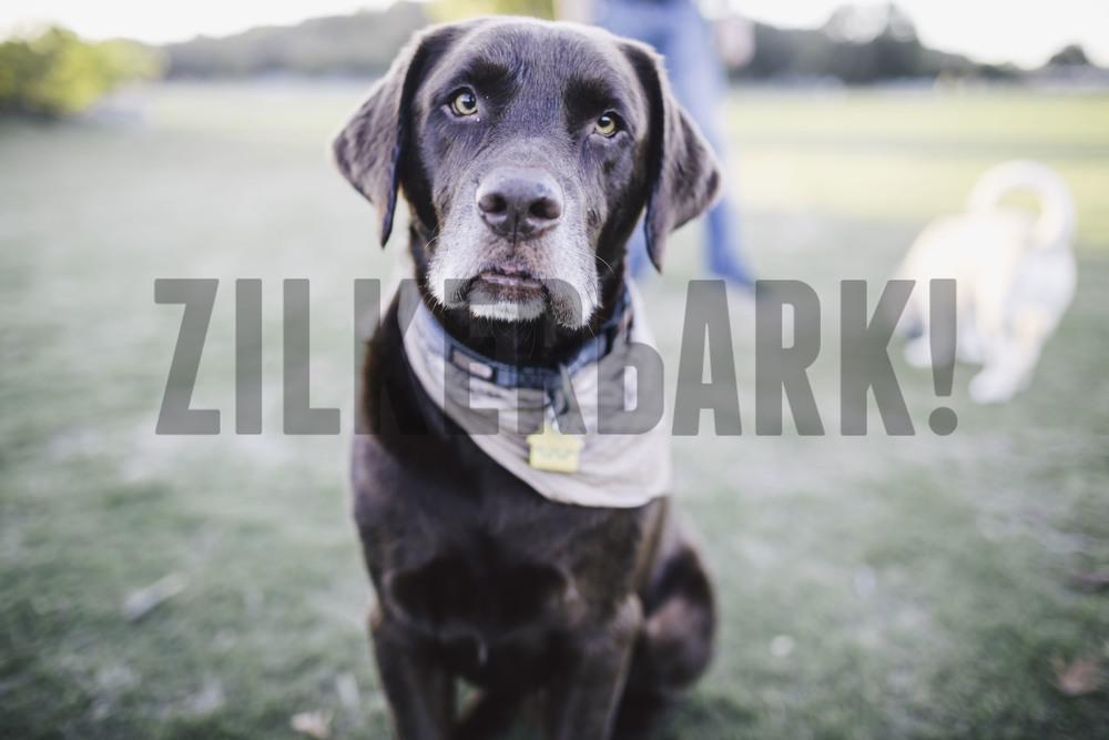 11.18 zilker dogs_-20.jpg